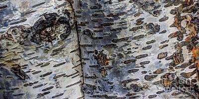 Birch Bark Photograph - Tree People by Heidi Smith