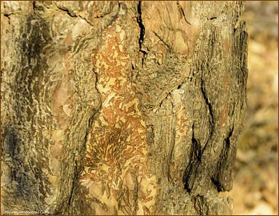 Colorful Photograph - Tree Self Reflections In Bark by LeeAnn McLaneGoetz McLaneGoetzStudioLLCcom