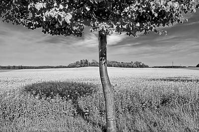 Nobody Photograph - Tree Shadow by EXparte SE
