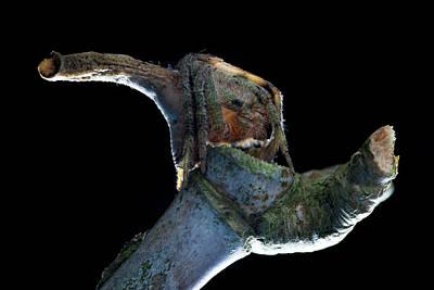 Tree Stump Orb-weaver Spider Print by Melvyn Yeo