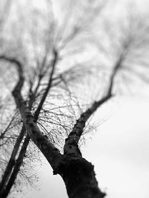 Kitchen Photograph - Tree by Taylan Soyturk