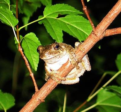 Tree Toad Night Print by Tamara Stickler