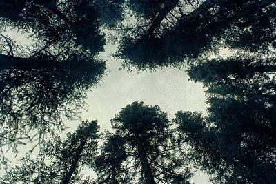 Black Top Digital Art - Tree Tops by Brett Pfister