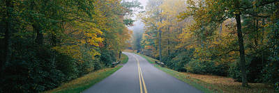 Trees Along A Road, Blue Ridge Parkway Print by Panoramic Images