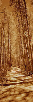 Log Cabin Photograph - Trees Along A Road, Log Cabin Gold by Panoramic Images