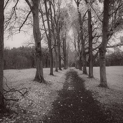 Appleton Photograph - Trees At Appleton by David Stone