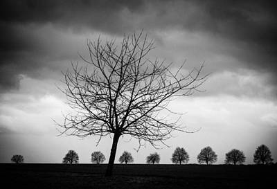 Trees Black And White Print by Matthias Hauser