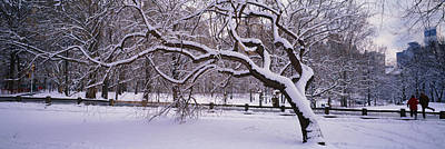 Bare Trees Photograph - Trees Covered With Snow In A Park by Panoramic Images