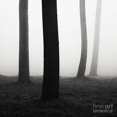 Forest Photograph - Trees Dancing In The Fog by Matteo Colombo