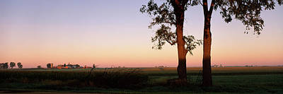 Trees In A Farm At Dusk, Ogle County Print by Panoramic Images