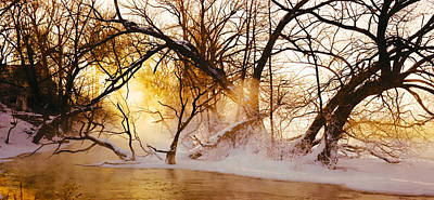 Bare Trees Photograph - Trees In A Forest by Panoramic Images
