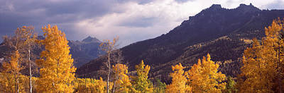 Trees In A Forest, U.s. Route 550 Print by Panoramic Images
