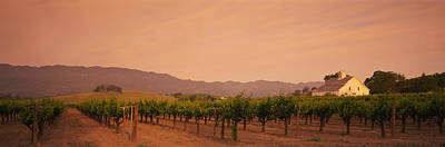 Vineyard In Napa Photograph - Trees In A Vineyards, Napa Valley by Panoramic Images