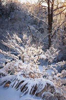 Hoarfrost Photograph - Trees In Forest After Winter Storm by Elena Elisseeva