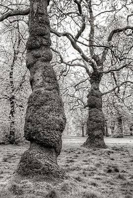Trees In Hyde Park London Print by Jim Hughes