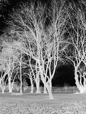 Trees In Park 2 Print by Chalet Roome-Rigdon