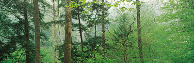 Trees In Spring Forest, Turkey Run Print by Panoramic Images