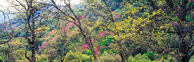 Redbud Photograph - Trees In Springtime, California, Usa by Panoramic Images