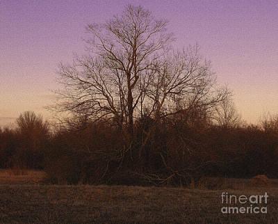 R. Mclellan Photograph - Trees In The Setting Sun by R McLellan