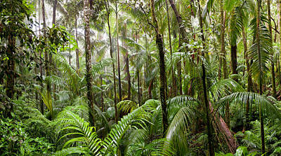 Trees In Tropical Rainforest, Eungella Print by Panoramic Images