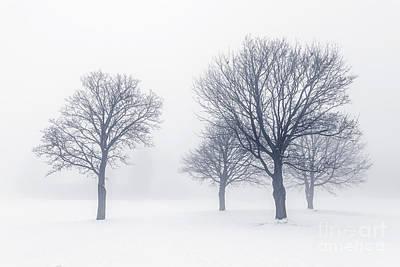 Trees In Winter Fog Print by Elena Elisseeva