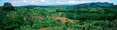 Trees On A Hill, Chamarel, Mauritius Print by Panoramic Images