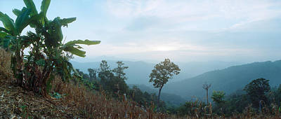 Trees On A Hill, Chiang Mai, Thailand Print by Panoramic Images