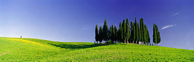Siena Photograph - Trees On A Landscape, Val Dorcia, Siena by Panoramic Images