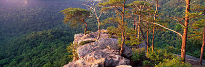 Buzzard Photograph - Trees On A Mountain, Buzzards Roost by Panoramic Images