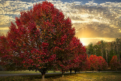 Fall Scenes Photograph - Trees On Fire by Debra and Dave Vanderlaan