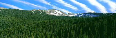 Trees On Mountain, Rendezvous Mountain Print by Panoramic Images