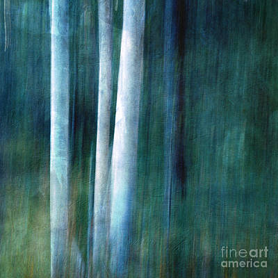 Nature Abstract Photograph - The Woods Are Lovely Dark And Deep by Priska Wettstein