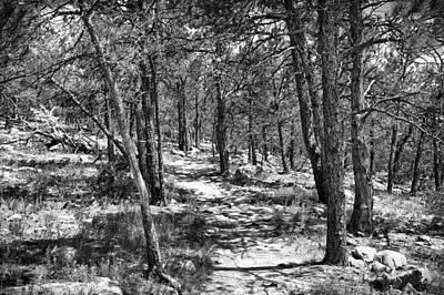 Photograph - Trees by Tony Boyajian