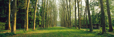 Converging Photograph - Trees Versailles France by Panoramic Images