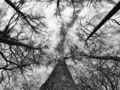 Treetops Print by Tom Druin