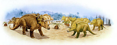 Paleozoology Photograph - Triceratops Dinosaurs by Deagostini/uig