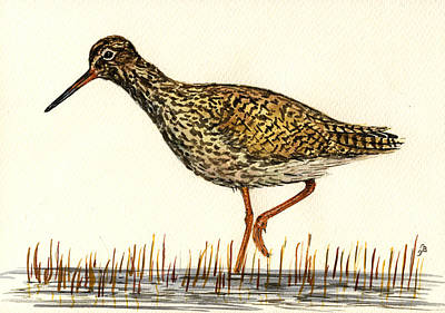 Plovers Painting - Tringa Totanus by Juan  Bosco