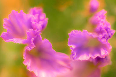 Nature Photograph - Trio by Ilka Boogaard