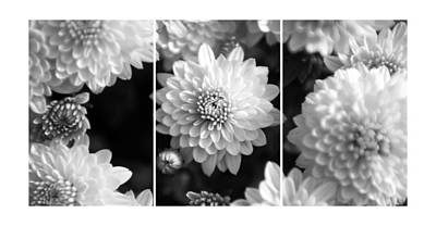 Trio Photograph - Triptych Pink Mum Flowers 4 by Jochen Schoenfeld