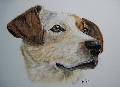 Cattle Dog Drawing - Trivia by Joan Pye