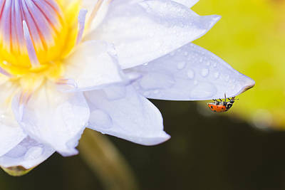 Ladybug Photograph - Tropical Adventure by Priya Ghose