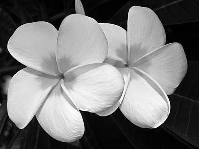 Plumeria Photograph - Tropical Beauty by Shane Kelly