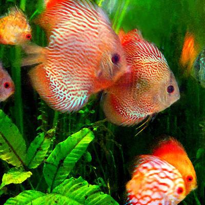 Colorful Tropical Fish Digital Art - Tropical Discus Fish Group by Amy Vangsgard