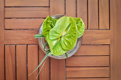 Anthurium Photograph - Tropical Flower by Tom Gowanlock