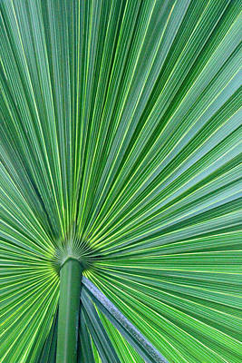 Photograph - Tropical Leaf by Carolyn Stagger Cokley