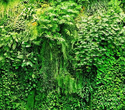 Stem Photograph - Tropical Plants Green Background by Michal Bednarek