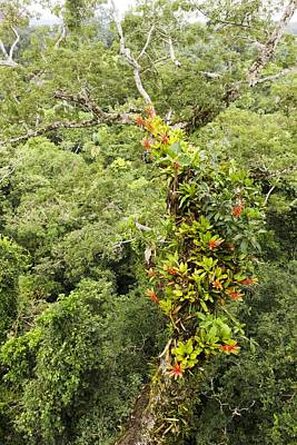 Epiphyte Photograph - Tropical Rainforest Epiphytes by Science Photo Library