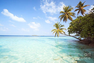 Tree Photograph - Tropical Sea In The Maldives - Indian Ocean by Matteo Colombo