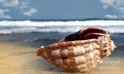 Tropical Shell Print by Kaye Menner