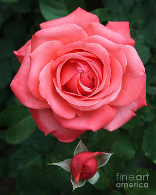 Tropicana Rose Original by Lena Auxier